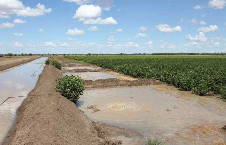 surface-irrigation-11